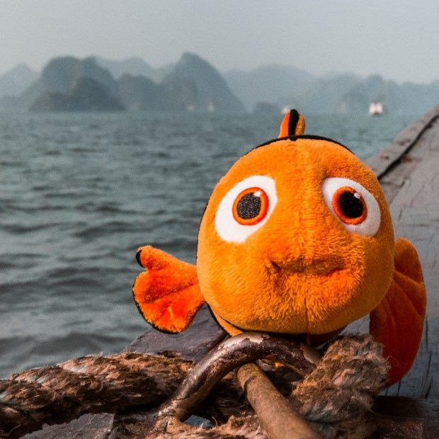 Nemo à la baie de Ha-Long
